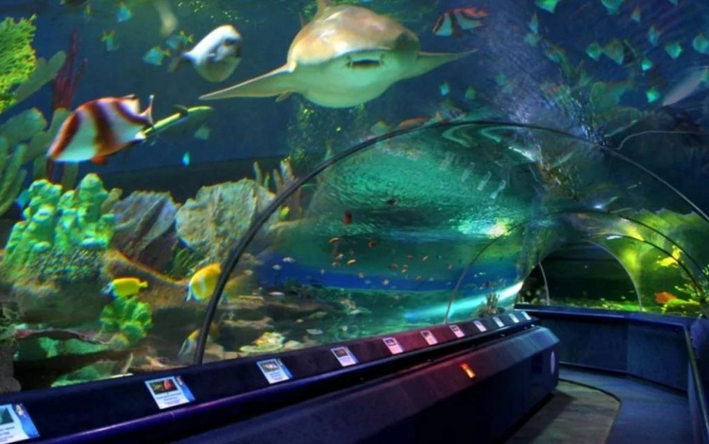 океанариум санкт-петербург
